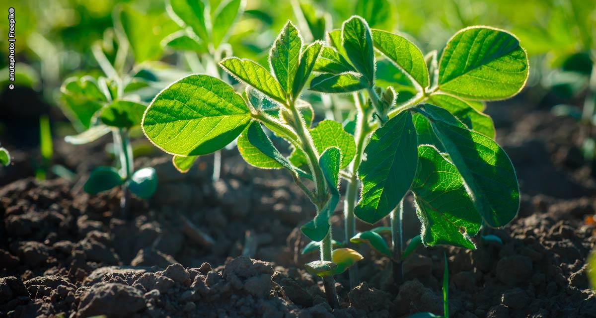 Projeto de cooperação vai estimular produção de 200 mil toneladas de soja sustentável no Maranhão