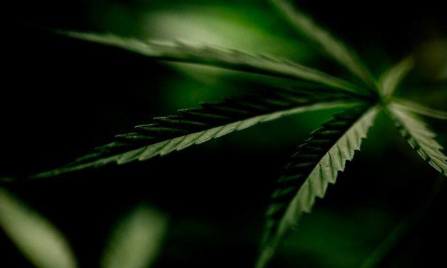 Cannabis Thinking reúne mais de 60 experts para debater negócios e tendências do mercado legal de cannabis
