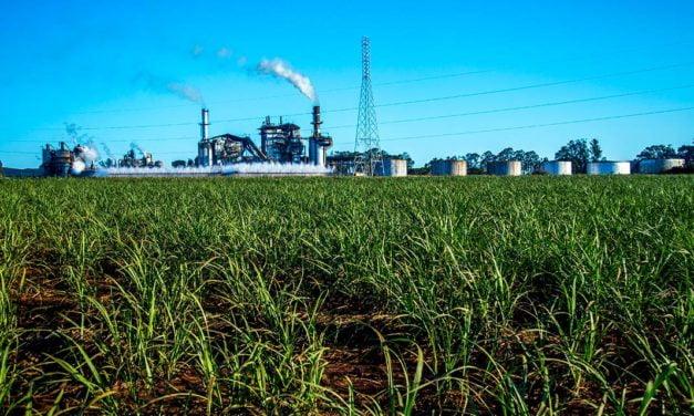 Produção de açúcar no Centro-Sul do Brasil na primeira quinzena de outubro deve cair 48% no ano, aponta pesquisa da Platts