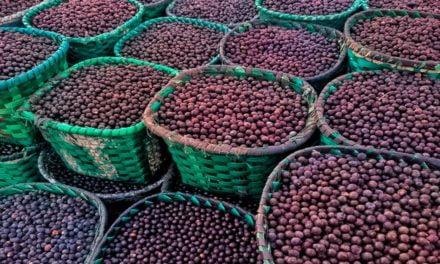Concepta Ingredients amplia sua linha de ingredientes orgânicos e exóticos com os lançamentos do Extrato e do Xarope de Açaí