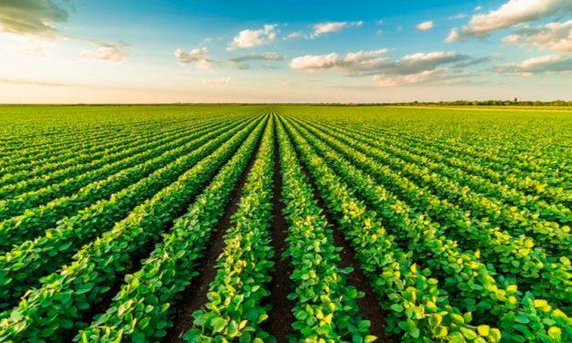 Hora H da Inovação: IHARA lança novo portfólio de soluções para o mercado de soja
