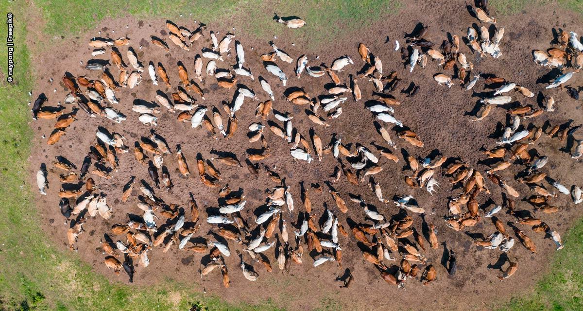 DSM celebra o Dia Nacional da Pecuária